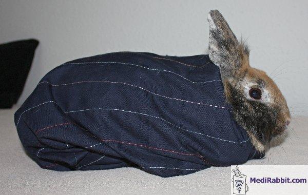 medirabbit, Cephalic Vein
