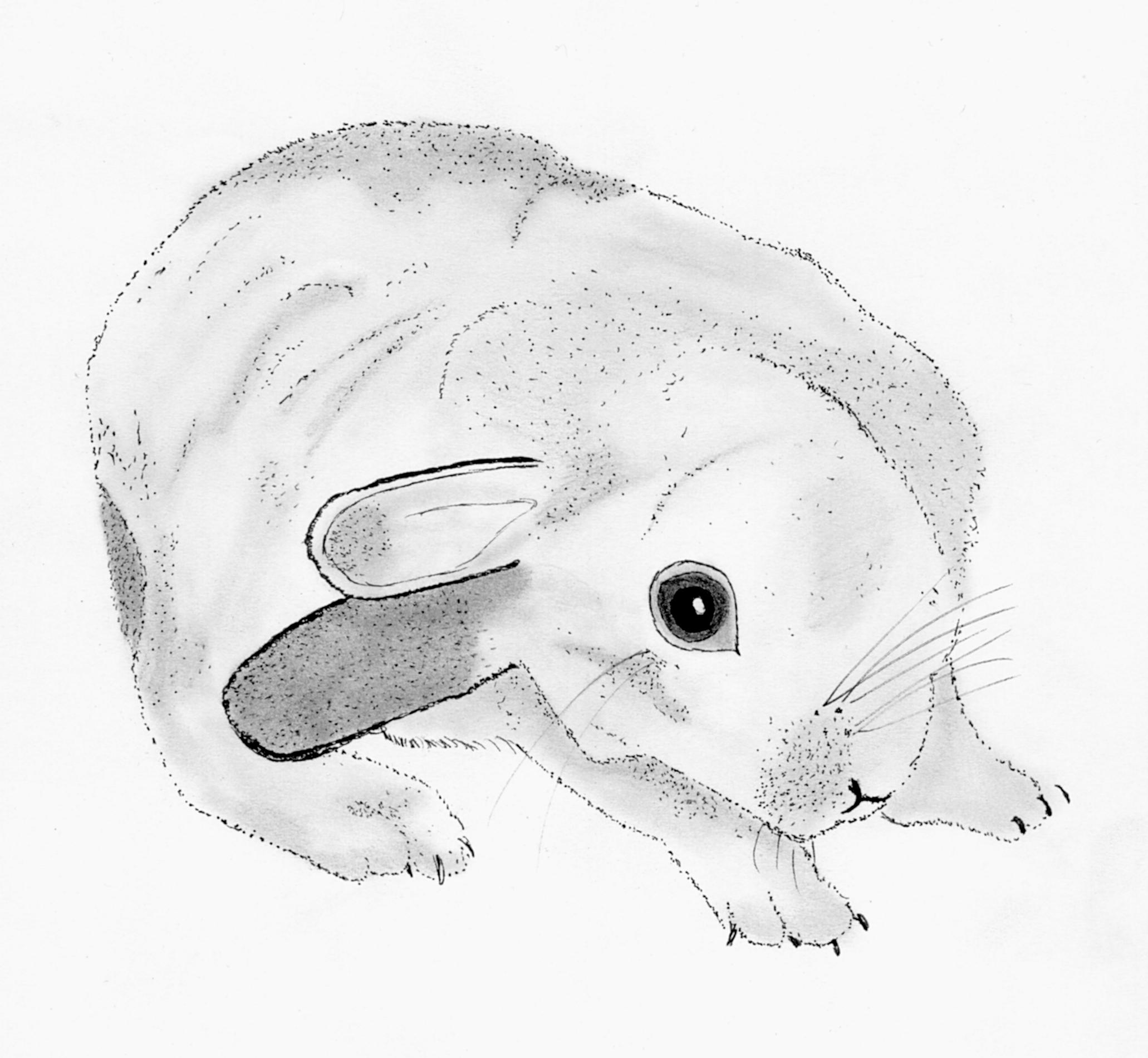 medirabbit