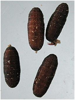 Medirabbit for Fliegen larve